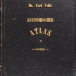 anatomischer-atlas