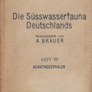 die-susswasserfauna-91359